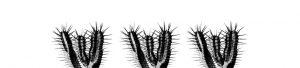 Cactus keuken achterwand