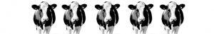 Cows op keuken achterwand