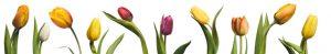 Tulips keuken achterwanden