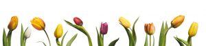 Tulips keuken achterwand