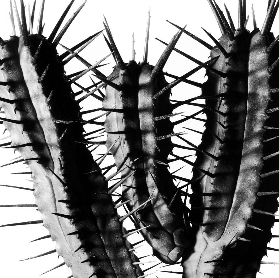 Cactus achterwand